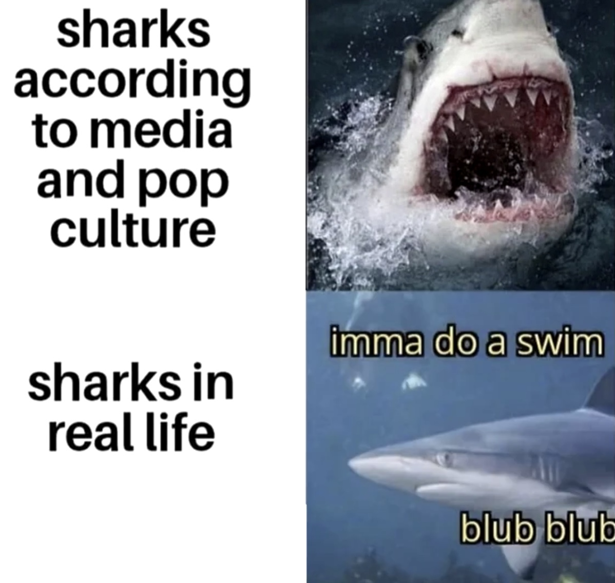 Sharks is good :> - meme