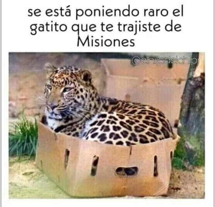 Contexto: misiones queda en Argentina, cerca de Uruguay y Paraguay - meme