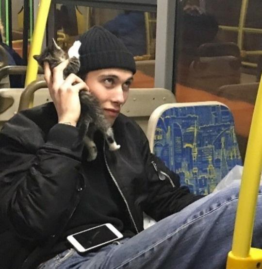Cat phone - meme