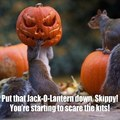 Early Halloween getting squirrels