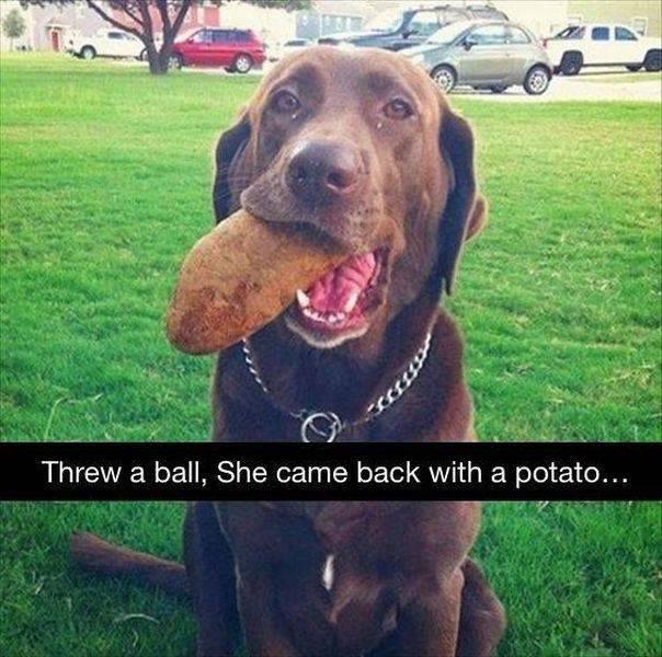 What the fuck doggo! - meme