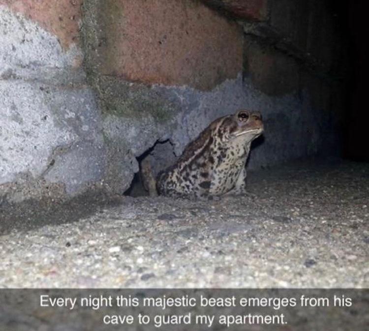 frog guard - meme