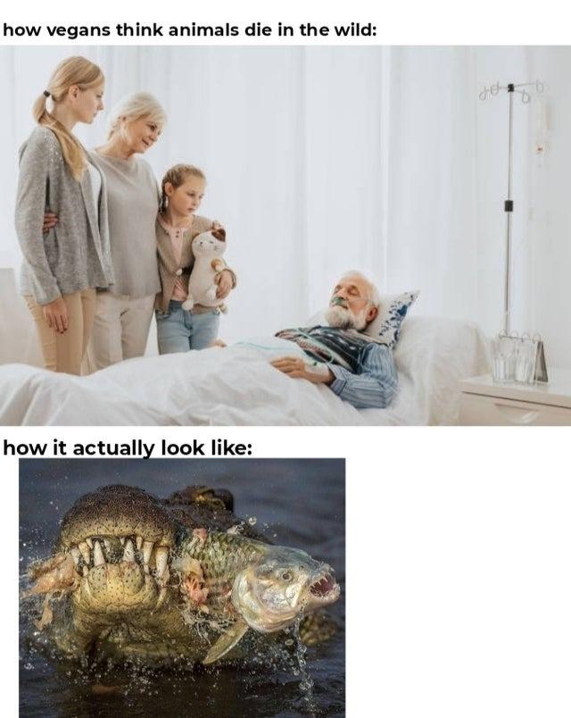Vegan moment - meme