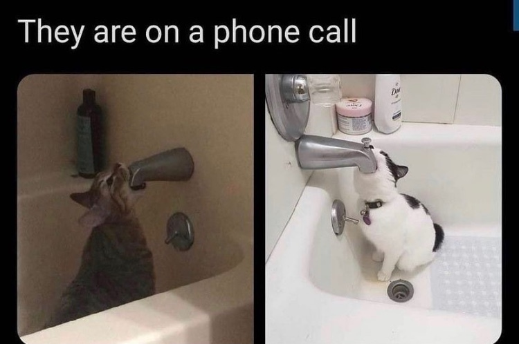 CAN YOU HEAR ME - meme