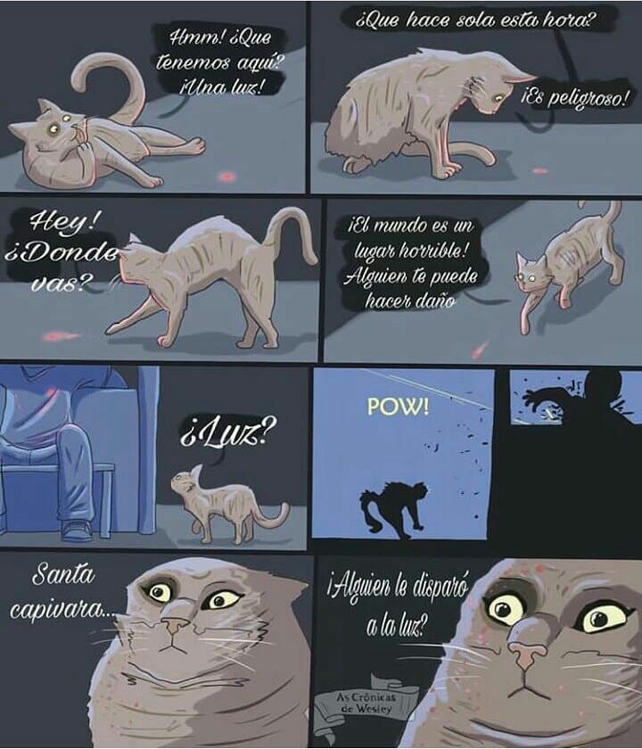 El gato está hecho un asco - meme