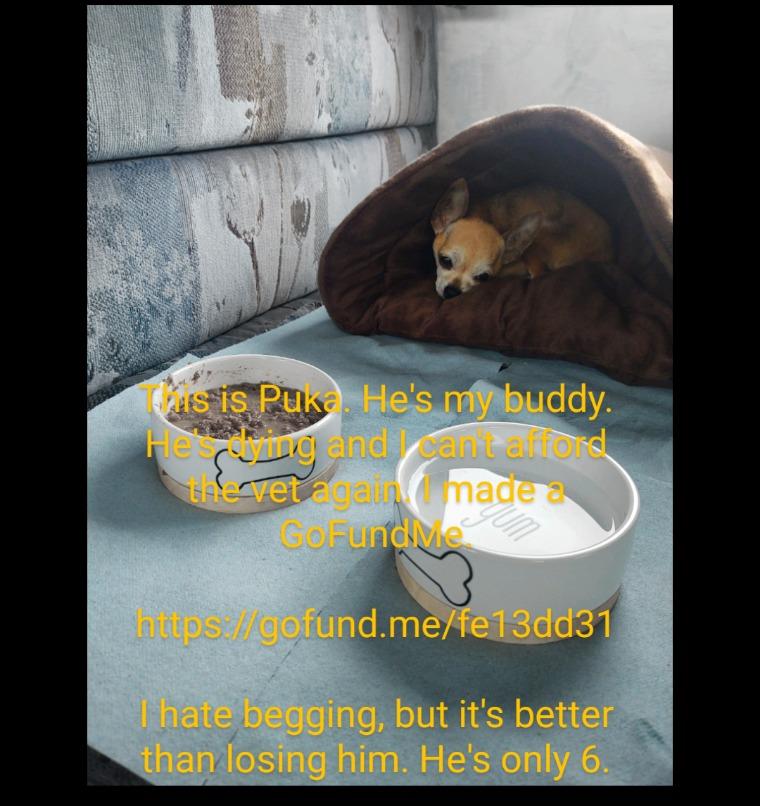 Please help me save my dog?  https://gofund.me/fe13dd31 - meme
