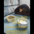 Please help me save my dog?  https://gofund.me/fe13dd31