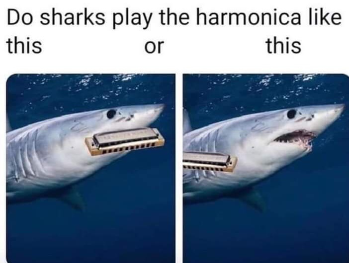 I have a question for terry the fat shark - meme