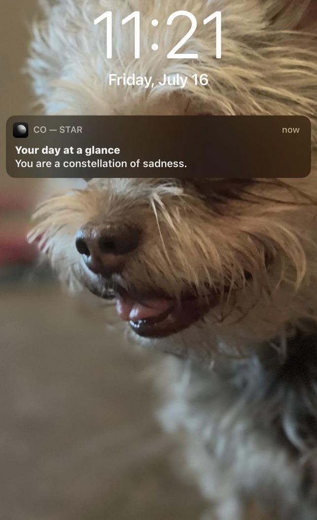 The Dog-Seer has spoken - meme