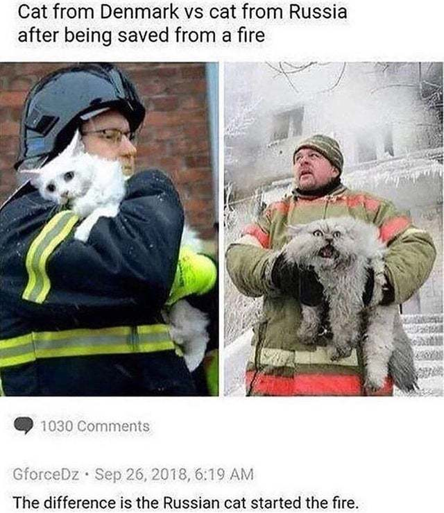 Cat from Denmark vs cat from Russia after being saved from a fire - meme