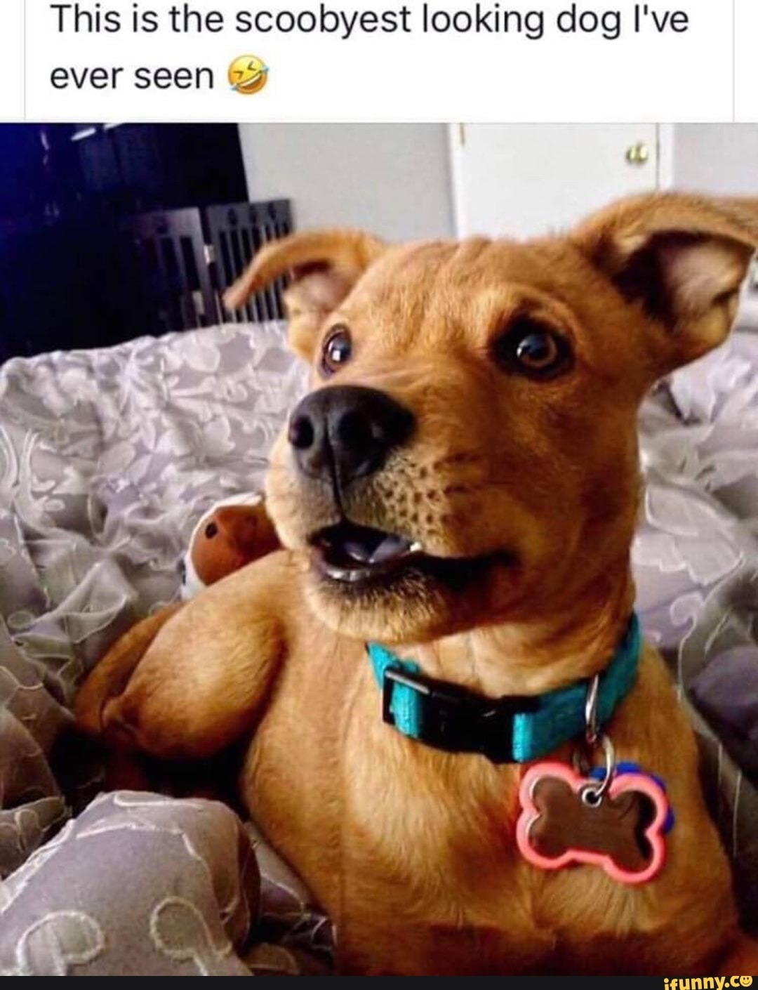 Scooby door looking doggo - meme