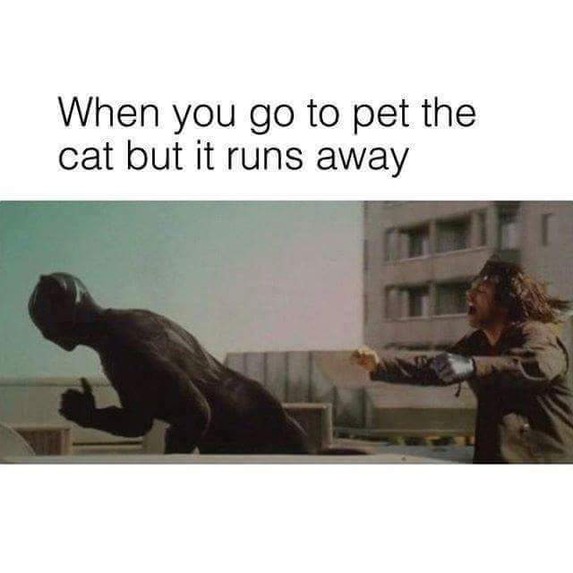 Am more of a dog person ... - meme
