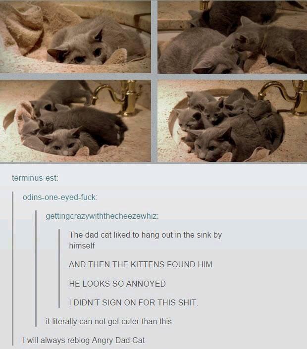 Bowl of kittens - meme