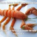 100% lagosta