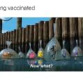 Where immunity ?