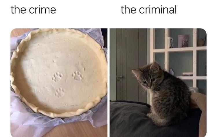 the cutest criminal - meme