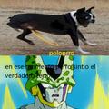 perro peruno