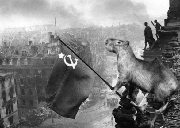 Carpincho Comunista - meme