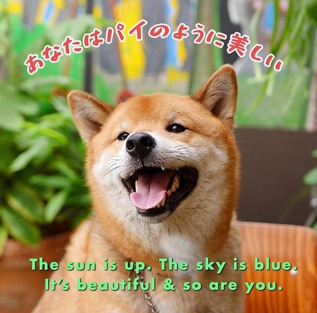 Happy doggo makes a happy day - meme