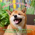Happy doggo makes a happy day