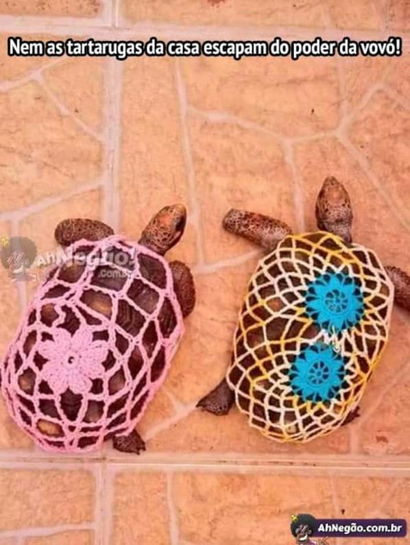 Poxa vó até a tartaruga - meme