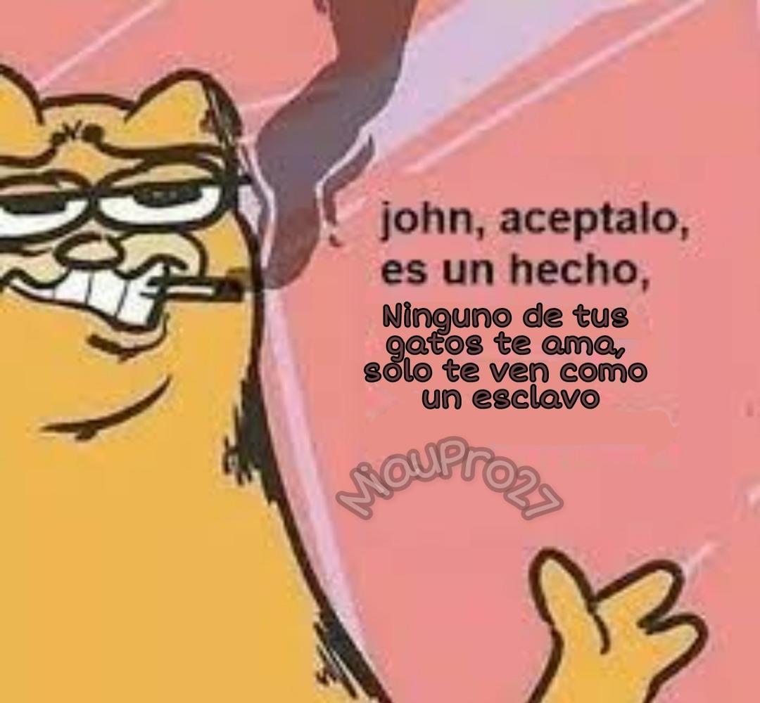 Tengo un amigo llamado John que tiene 3 gatos así que se me ocurrió esta cosa - meme