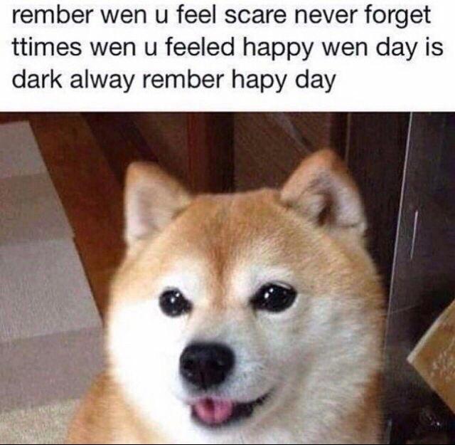 doge wisdom - meme
