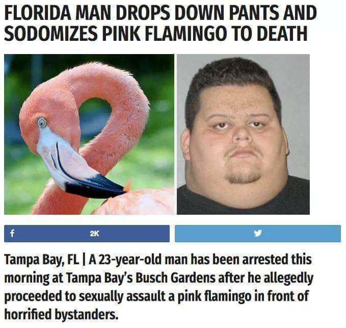 That damn Florida Man - meme