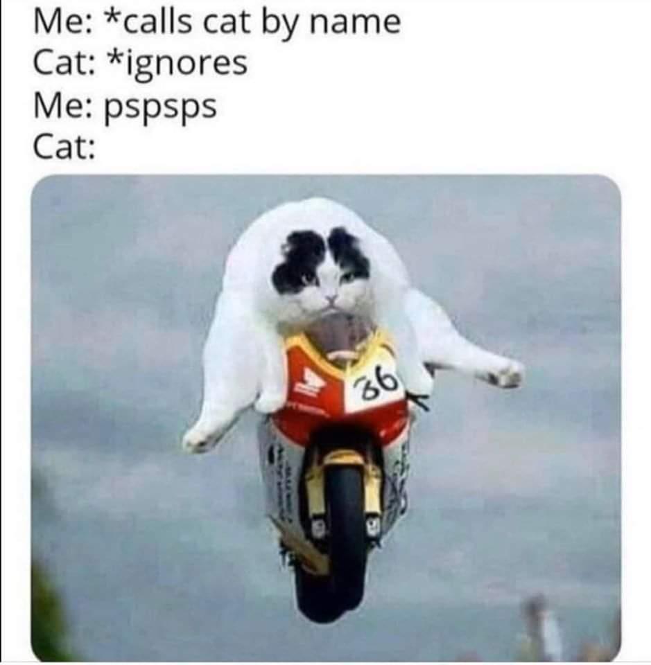 Cats like that sound - meme