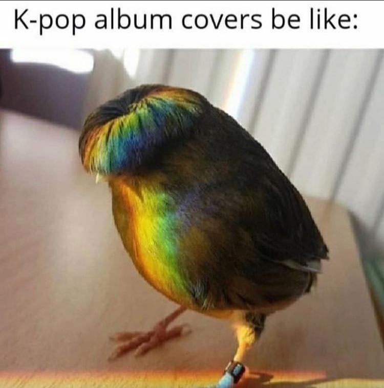 kpop bird - meme