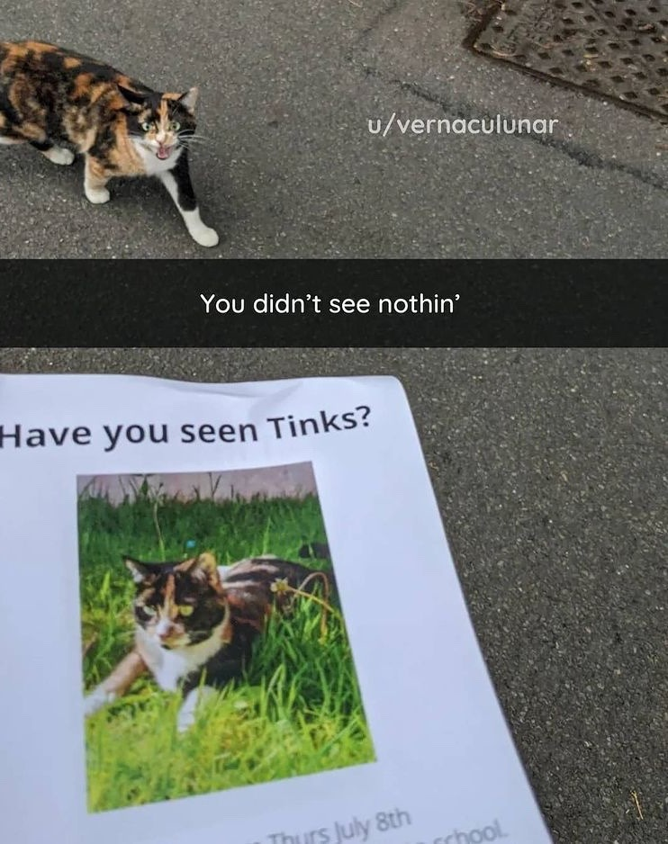 have you seen tinks? - meme