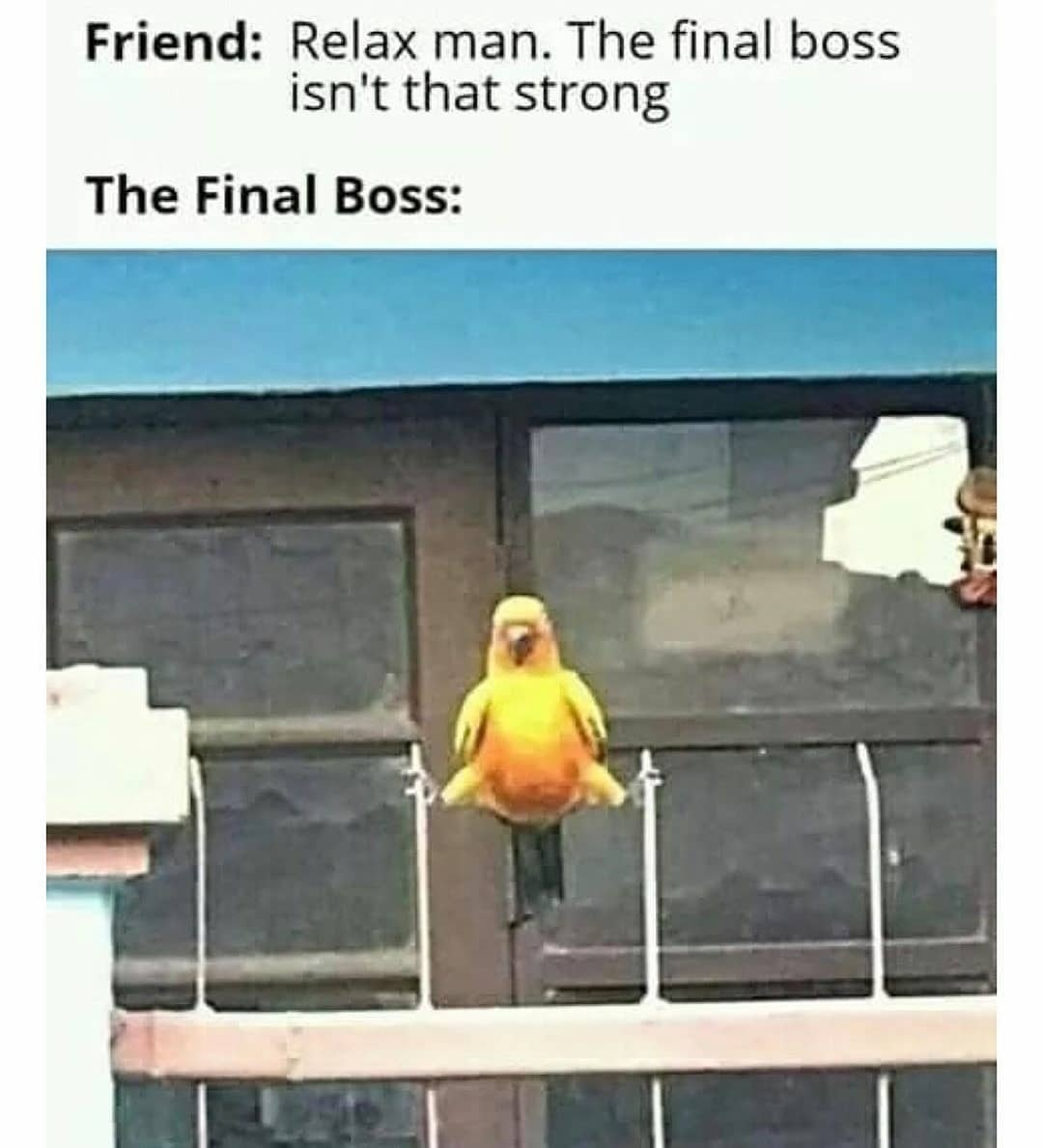 Final boss is a bird wtf - meme
