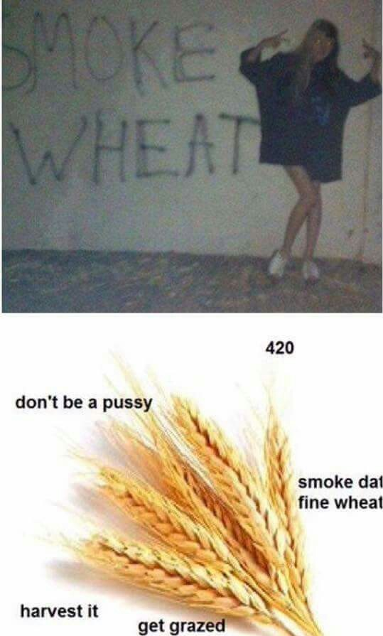 Wheat - meme