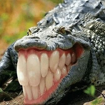 crocotrilos - meme