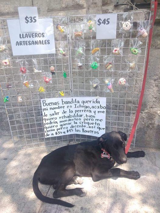 perro bacan trabajador - meme