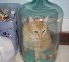 Gato Hudini - meme