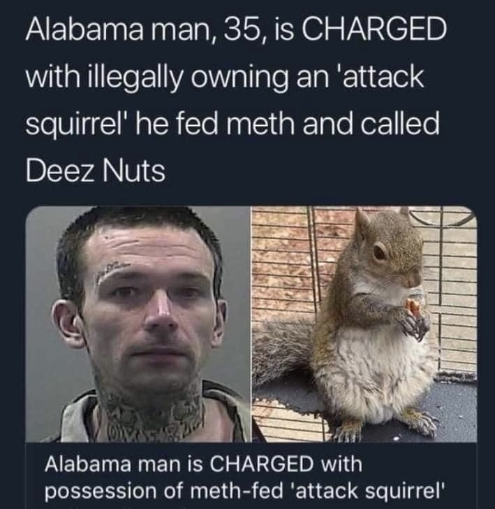 Thank god it's not a flying squirrel - meme