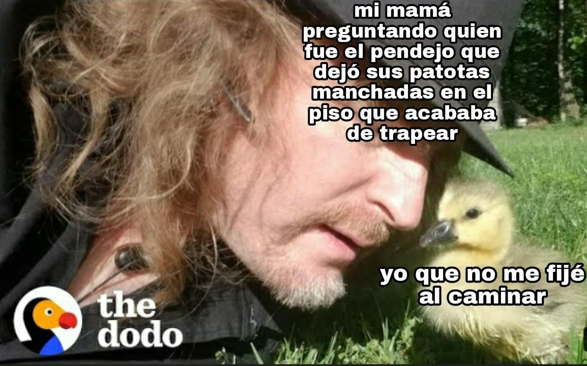 """The dodo"" es un canal de YouTube de donde saqué la miniatura - meme"