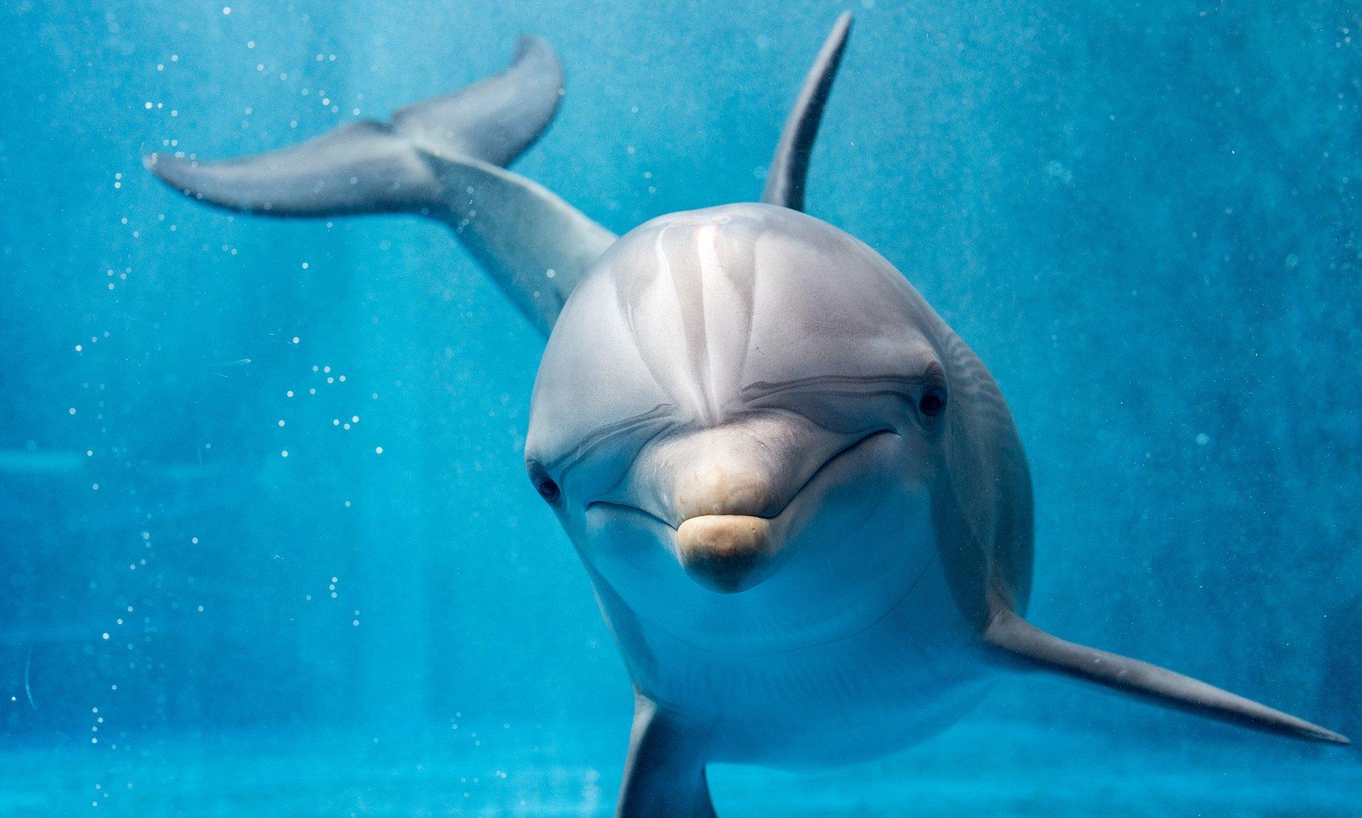 Sigue moderando, solo hay algunos delfines por aqui - meme