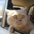 When Felix saw them pulling into the Vet's parking lot he knew the fix was in!