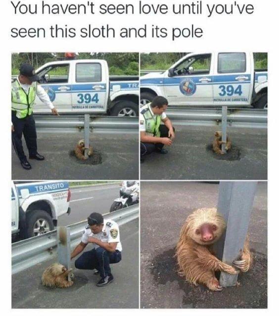 Hold on little guy - meme