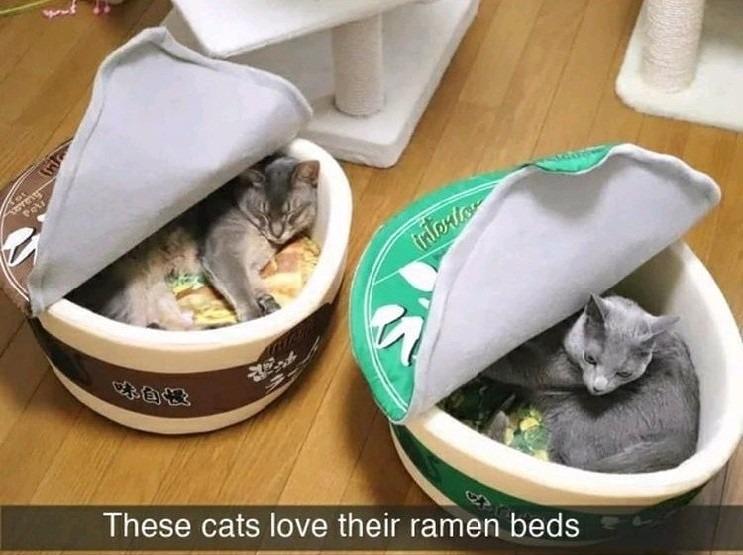 My kitties :) - meme