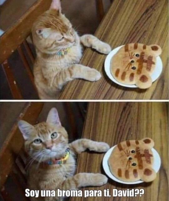 Pobre gatito - meme