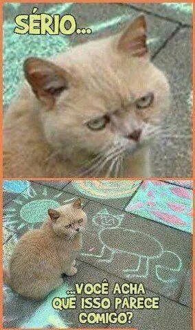 O gato e seu retrato.... - meme