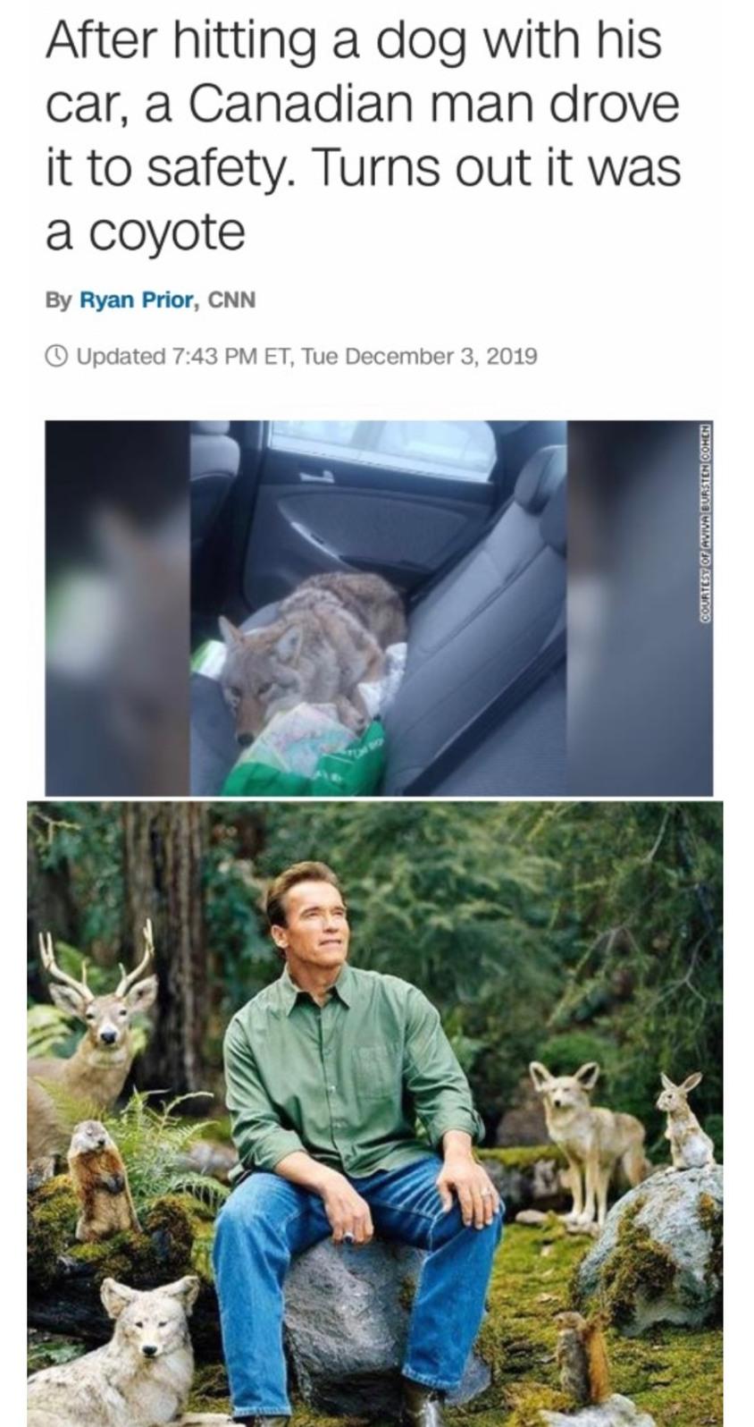wild doggo is a good boi, making full recovery - meme