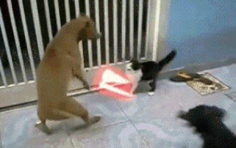 El gato vader - meme