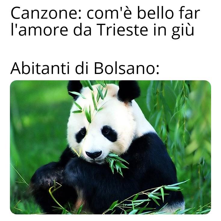 Per i più ingenui: i panda si riprodicono MALE e pure semza voglia - meme
