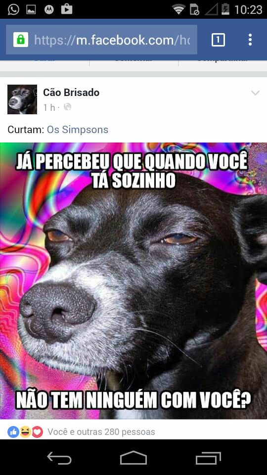 Cão Brisado - meme