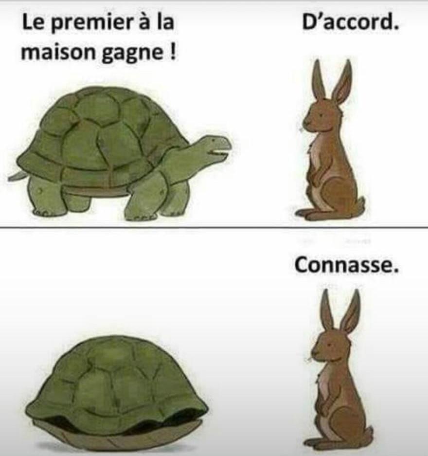 Turtle's speed - meme