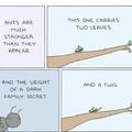 Ants have secrets